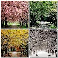 [four+seasons.JPG]