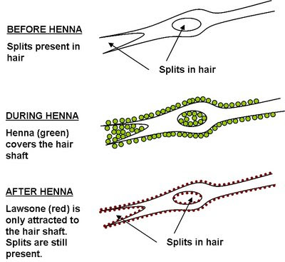 THE NATURAL HAVEN: Splitting Hairs: Chemical Schemical