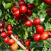 Colombia produced nearly 9 million bags of coffee in 2010 and exported 7.8 million