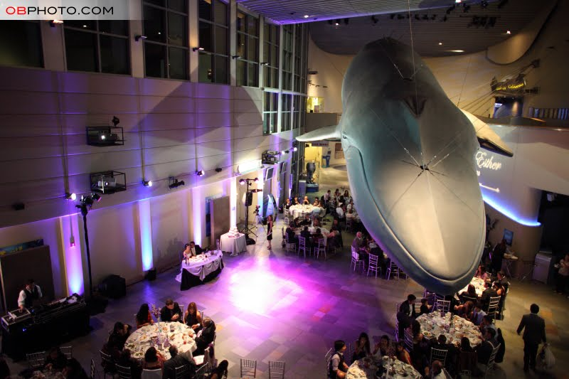 Daily Shot Of Jack Whale of a time Long Beach Aquarium Wedding