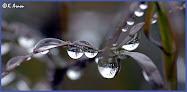 toute cette pluie....