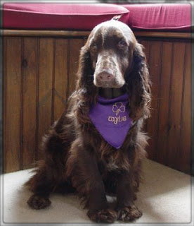 Field Spaniel Cute Dog IMage