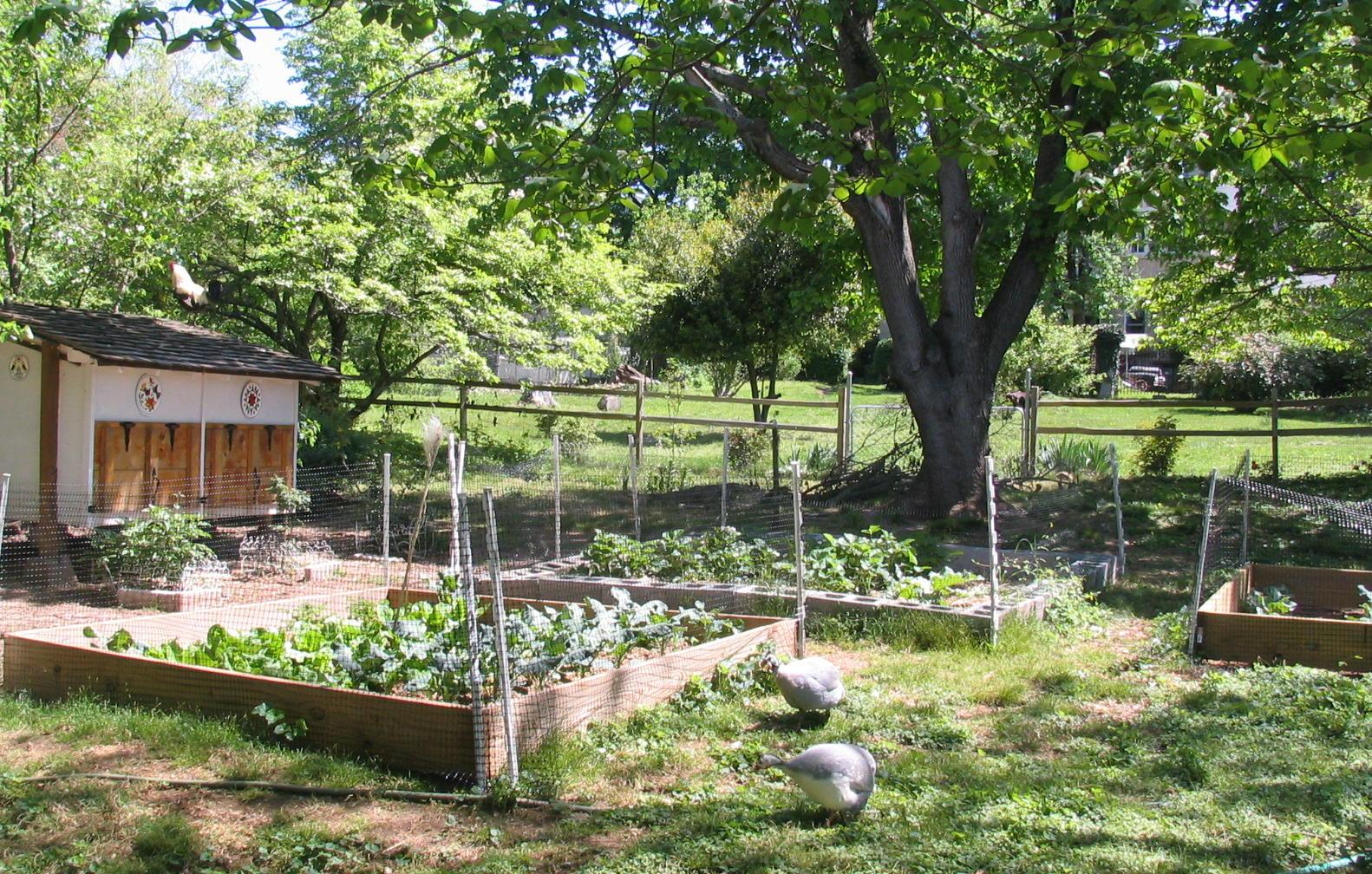 The Kitchen Garden Bungalow Reborn The Worth Knox House The Kitchen Garden