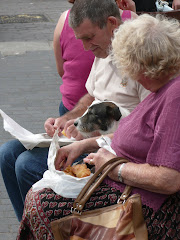 Dogs of the World - chip time in Brixham