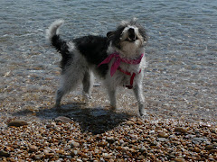 dogs of the world - Flo, Slapton