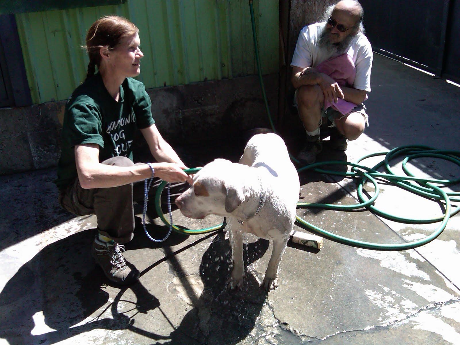 Lori s Corner – Page 4 – Downtown Dog Rescue