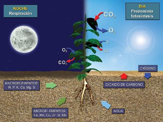 Fotosíntesis y Respiración celular y diferencias.