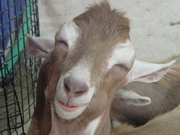http://2.bp.blogspot.com/_Gu9idOHITys/TOZsT0rJciI/AAAAAAAABAk/sZMoj4rrjDk/s320/hewan-qurban-smile.jpg