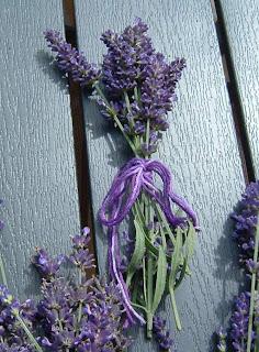 Lavendel einsetzen