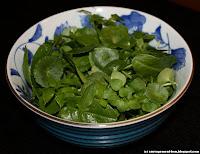 Salade d'ombilic, oseille, stellaire et égopode