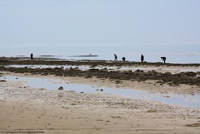 Ramasseurs de moules sur une plage normande