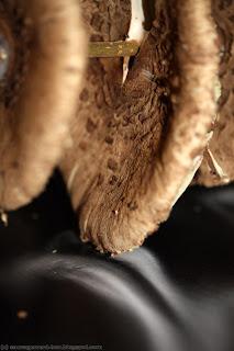 Coulemelles en plein séchage, en se déposant sur la table noire, les spores blanches forment des volutes