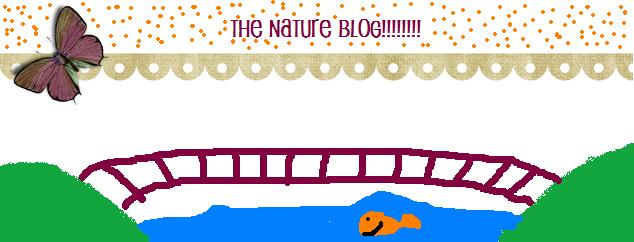 The Nature Blog
