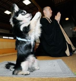 Buddhist Dog prays