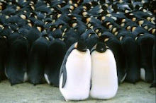 ancora pinguini