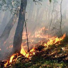 incendio nella taiga
