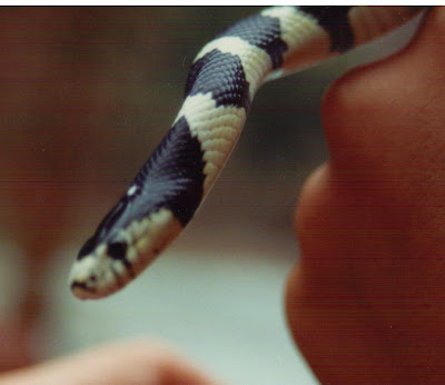 Site Blogspot  Bedding California King on Cannundrums  California Kingsnake