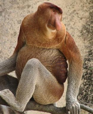 Foto-Foto Monyet Aneh dan Unik di Dunia