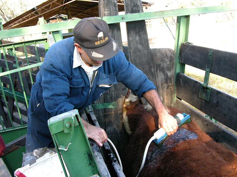 Trazabilidad: hacia la ficha técnica del animal