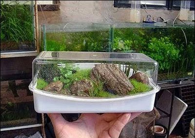 The smallest aquarium in the world share everything in life for Micro fish tank