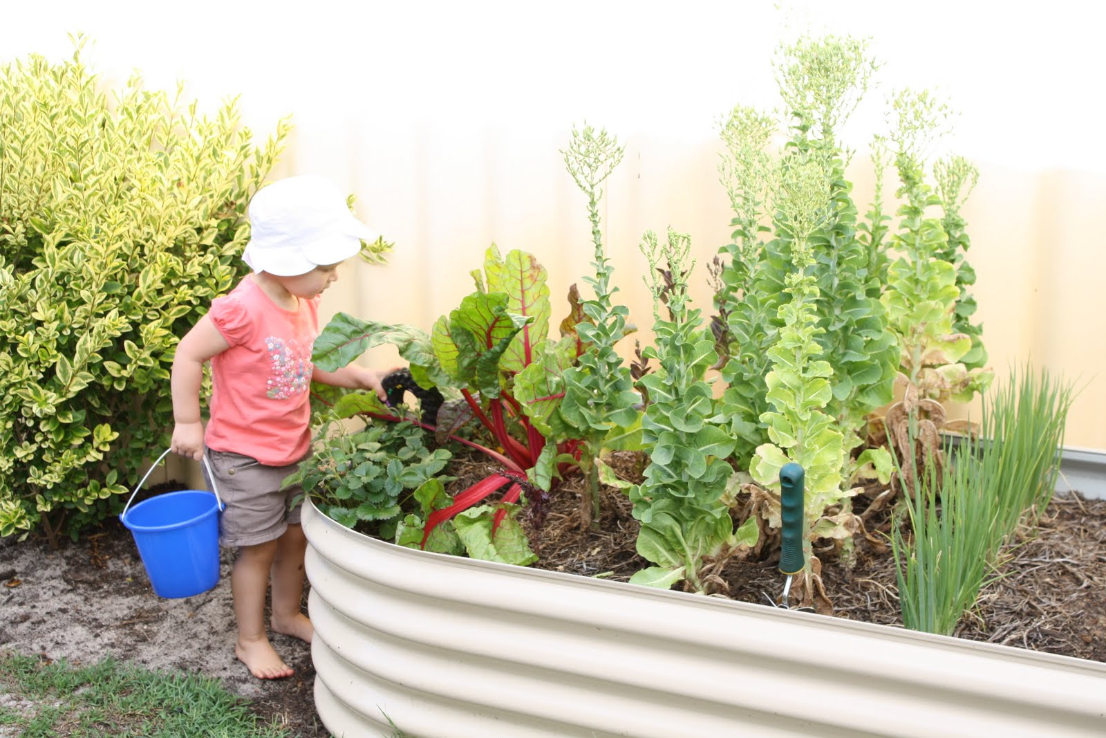 Summer vegetable garden for Summer vegetable garden