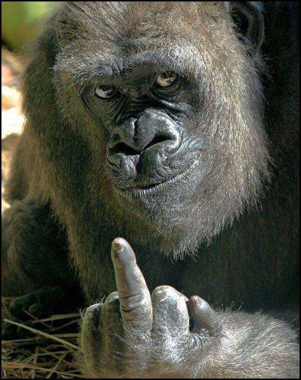 Feliz Natal e um prospero ano novo! Macaco+dando+o+dedo