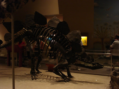 Stegosaurus skeleton