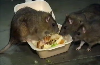 mice eating hamburger in a to-go box