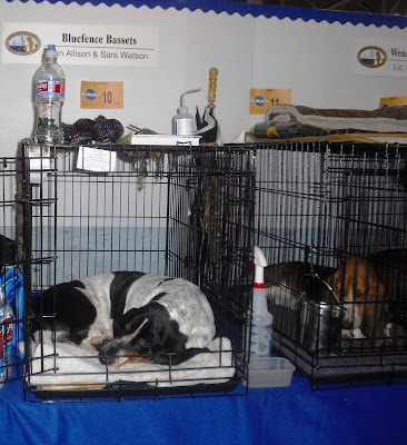 Two bassett hounds sleeping after a long day at the show