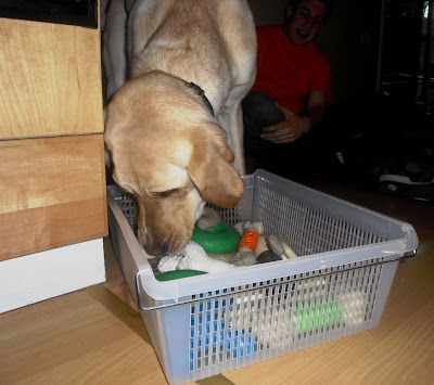 Hoops dives into the toy basket searching for his favorite toy!