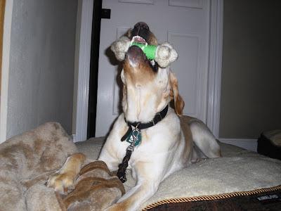 Hoops find his favorite toy.
