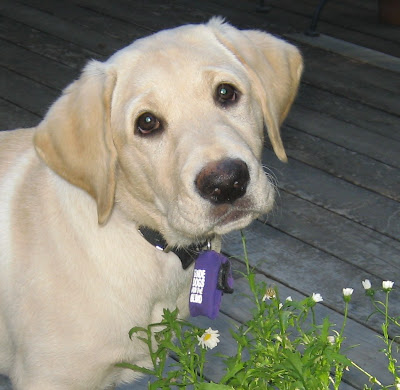 Close up of Reyna's face when she was a puppy.