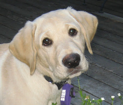 Close up of Reyna's face when she was a little puppy.