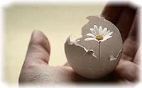 Рука, цветок, яйцо