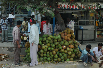 Green Coconuts in India