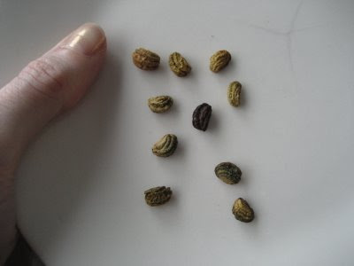 Name These Mystery Seeds