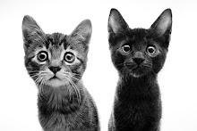 Faster Kill Pussycat -