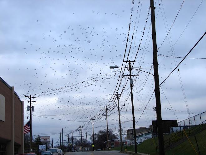 12-1-06_Birds