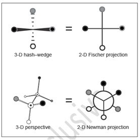 how to draw fischer projections from newman projections