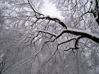 Trees in a Blizzard