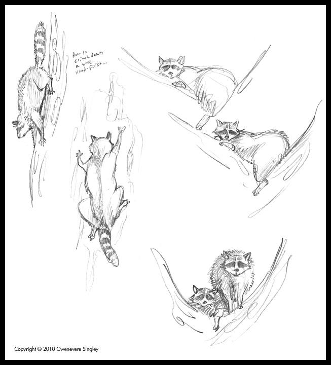 queen gwenevere u0026 39 s ramblings  raccoons and tornadoes