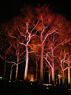 Trees lit up in red in Kings Park, Perth