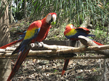Manic Macaws