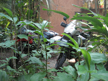 Bikes together in the Jungle