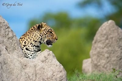 greg du toit, photographic safari, safari, shem compion, delta safari