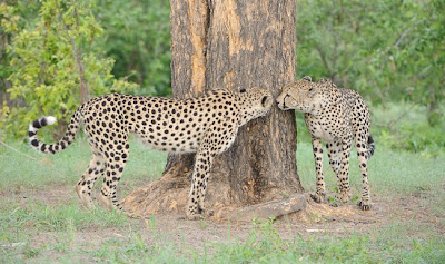 c4 images and safaris, greg du toit, okavango delta, photo tour, safari, shem compion