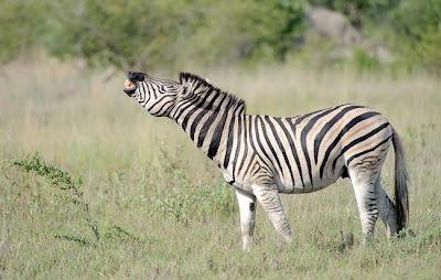c4 images and safaris, greg du toit, okavango delta, photo tour, safari, shem compion