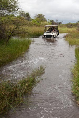 c4 images and safaris, greg du toit, isak pretorius, okavango delta, safari, wildlife
