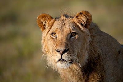 central kalahari,  c4 images and safaris, shem compion,  photo tour,  photo safaris,