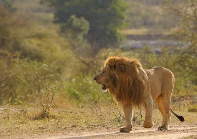 c4 images and safaris, masai mara, photo tour